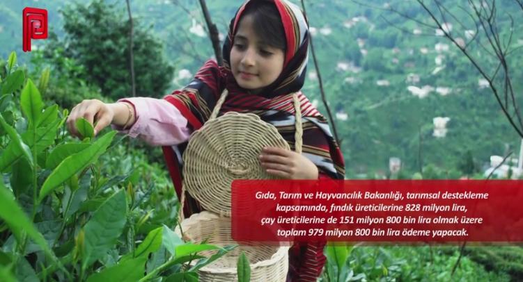 Çay ve fındık üreticisine 980 milyon liralık destek ödemesi