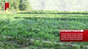 Solucan Gübresi ile Organik Tarım