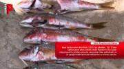 Balık fiyatlarında rekor