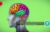 Beyni Sulanmak
