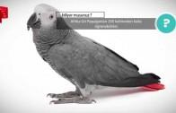 En Zeki Papağan