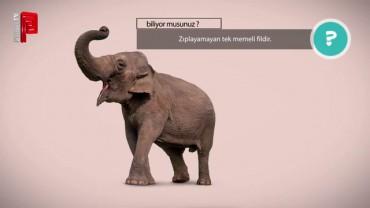Fil zıplamaz