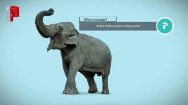 Afrika fillerinin kaç dişi vardır?