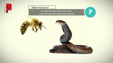 Arı vs Yılan