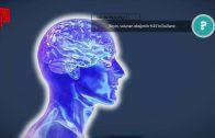 Beyin ne kadar oksijen tüketir?