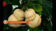 Tuhaf Şekilli Meyve Sebze Sektörü