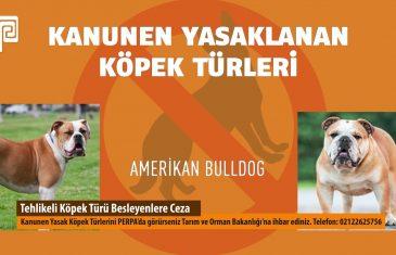 Tehlikeli Köpek Türü Besleyenlere Ceza PERPA