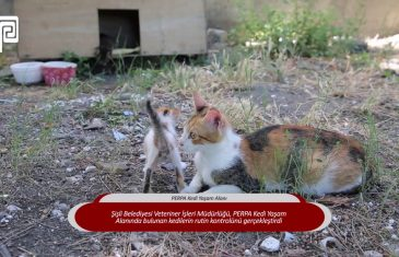 PERPA Kedilerinin Rutin Kontrolü Yapıldı