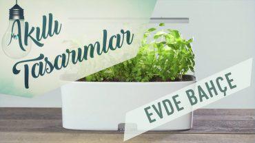 Evde Yeşillik Yetiştirmek için Özel Saksı